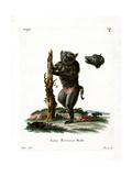 Hog-Faced Baboon Giclee Print