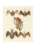 Strange Chiroptera Giclee Print