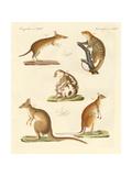 Strange Marsupials Giclee Print