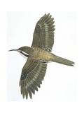 Birds: Passeriformes, Common Treecreeper (Certhia Familiaris) Giclee Print