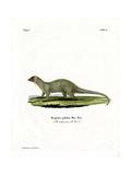 Mongoose Giclee Print