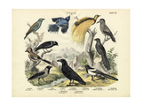 Birds, C.1860 Giclee Print
