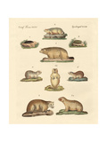 Marmots and Moles Giclee Print