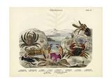 Crabs, C.1860 Giclee Print