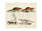 Strange Mammals Giclee Print