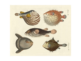 Wonderful Fish Giclee Print