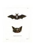 Particoloured Bat Giclee Print
