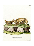 Greater Bulldog Bat Giclee Print