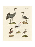Strange Beach Birds Giclee Print