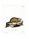 Groundhog Giclee Print