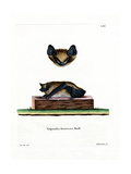 Serotine Bat Giclee Print