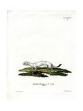 Ermine Giclee Print