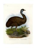 Emu, 1864 Impression giclée