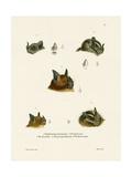 Bat Heads Giclee Print