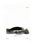 Sea Otter Giclee Print