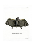 Spectral Bat Giclee Print