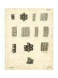 Skin Scales Giclee Print