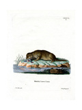 Common Otter Giclee Print