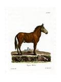 Mule Giclee Print