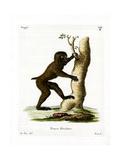 Wood Baboon Giclee Print