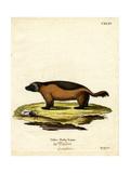 Wolverine Giclee Print