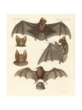 New Bats Giclee Print