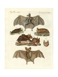 Rare Bats Giclee Print