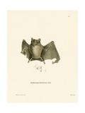 Ipanema Bat Giclee Print