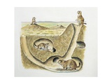 Close-Up of Four Prairie Dogs (Cynomys Ludovicianus) Giclee Print