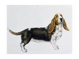 Basset Hound (Canis Lupus), Canidae, Drawing Giclee Print