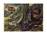 Atlantic Bushmaster (Lachesis Mutus), Viperidae Giclee Print