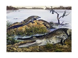 American Crocodile (Crocodylus Acutus), Crocodylidae, Drawing Impressão giclée