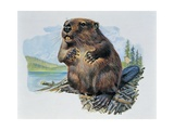Close-Up of a Beaver Sitting Giclee Print