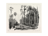 Road Making, and Draining the Land, Sumatra, Indonesia, 1890 Giclee Print