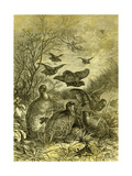 Partridges Austria 1891 Giclee Print