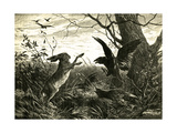 Hare Austria 1891 Impression giclée