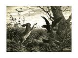 Hare Austria 1891 Giclee Print