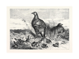 A Brood of Partridges Giclee Print