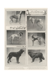 Notable Prize-Winners at the Kennel Club's Forty-Sixth Exhibition Giclee Print