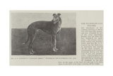 Mr G F Fawcett's Farndon Ferry, Winner of the Waterloo Cup, 1902 Giclee Print