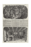 The Cultivation and Manufacture of Cocoa Giclee Print
