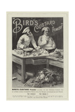 Advertisement, Bird's Custard Powder Giclee Print