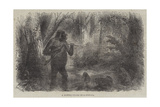 A Hunter Killed by a Gorilla Giclee Print