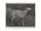 Thoughtless Beauty, the Winner of the Waterloo Cup Giclee Print