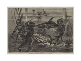 Extraordinary Submarine Adventure with a Sword-Fish Giclee Print
