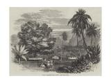 Cook's Tamarind-Tree, Tahiti Giclee Print