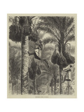 Gathering Dates in Ceylon Giclee Print