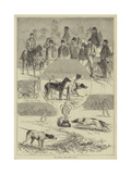 The Kennel Club Field Trials Giclee Print