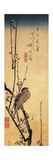 Bullfinch Perching on a Branch of a Japanese Plum Tree Giclee Print