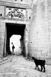 Goat and Man, Fort Entrance Gate, Jaisalmer, Rajasthan, India, 1984 Photographic Print